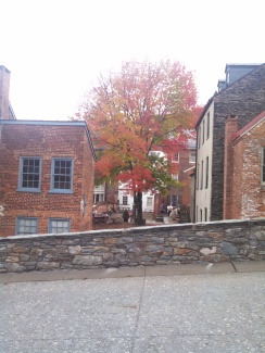Autumn Tree at Harpers Ferry
